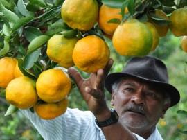 colhetas de laranjas alagoa nova foto antonio david (33)