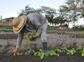 emater agricultura familiar lagoa seca foto francisco franca (1)