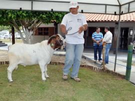 leilao de caprino e ovinos em capina grande foto claudio goes (1)