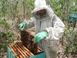 Agricultores familiares apostam na apicultura como fonte de renda