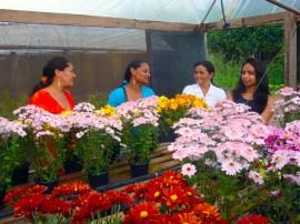 Flores_produção_Brejo