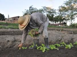 emater agricultura familiar lagoa seca foto francisco franca 2