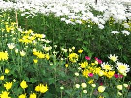 Pilões_flores 110