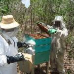 apicultura mel abelha (1)