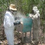 apicultura mel abelha