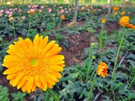 flore, estufa, agricultura cidade de piloes foto joao francisco 86