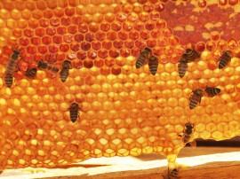 26.10.12 mida e cooperar_visita_apicultores+foto_alberi pontes 1 (4)