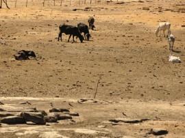 30.10.12 gado sofre com a seca_foto_alberi pontes (32)