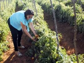agricultura em conceicao acude cacimba nova foto sonia alves (17) (1)