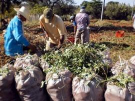 agricultura em conceicao acude cacimba nova foto sonia alves (4) (1)