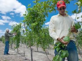emater agricultura de hotalicas curimatau foto antonio david (1)
