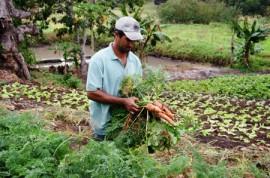 emater agricultura familiar areia foto antonio david (2)