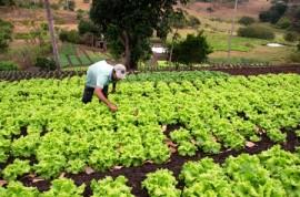 emater agricultura familiar areia foto antonio david