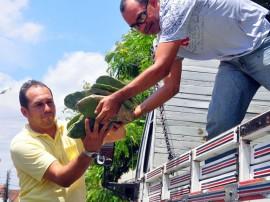 entrega de palma na emater itabaiana jose lins secom pb_0196