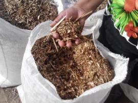 distribuicao de racao na cidade de conceicao (3)