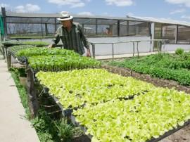 emater agricultura   familiar nova floresta (23)