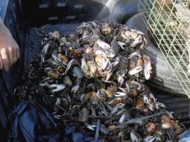 fiscalização-defeso-caranguejo (1)