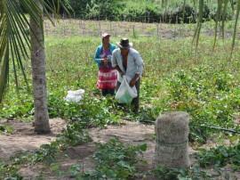 emater agricultura familiar cultivo de mandioca pnae