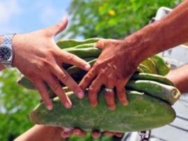 entrega de palma fotos jose lins secom pb 270x2023 270x202 - Governo incentiva plantio de palma e garante reserva alimentar na estiagem