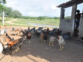 emater criativida na agricultura e criacao de galinhas 1 270x202 - Governo incentiva produção de hortaliças e avicultura no Sertão