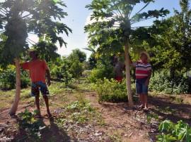 emater criativida na agricultura e criacao de galinhas 270x202 - Governo incentiva produção de hortaliças e avicultura no Sertão