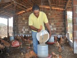 emater familias em gurinhem criam aves em sistema semi-aberto (1)