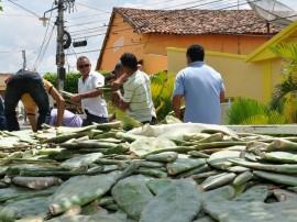 emater palma e racao animal 22 270x202 - Criadores do Vale do Paraíba instalam sementeiras para produção de ração animal