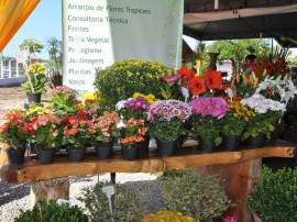 10.05.12 feira flores foto jose lins 10 270x202 - Governo do Estado promove Feira de Flores na Empasa