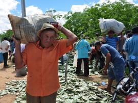 21.056.13 vale estadia campo algodao jandaira 3 270x202 - Governo distribui raquetes de palma para agricultores do Curimataú