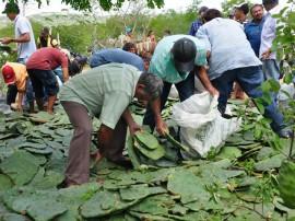 21.056.13 vale estadia campo algodao jandaira33 1 270x202 - Governo distribui raquetes de palma para agricultores do Curimataú