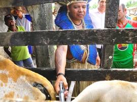 23.05.13 vacinacao aftosa rebanho indigena fotos roberto guedes secom pb 1271 270x202 - Povo potiguara inicia vacinação do rebanho contra febre aftosa