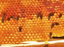 26.10.12 mida e cooperar visita apicultores+foto alberi pontes 1 4 270x202 - Governo beneficia 10 mil famílias com recursos do Projeto Cooperar