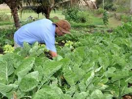emater IX semana de alimentos organicos 21 270x202 - Governo do Estado comemora Semana de Alimentos Orgânicos