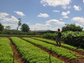 emater agricultura familiar  DSC 0518Vieiropolis5 270x202 - Governo incentiva agricultura familiar no Sertão paraibano