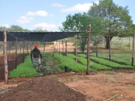 emater agricultura familiar  DSC 0523Vieiropólis2 270x202 - Governo incentiva agricultura familiar no Sertão paraibano