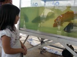 empasa acao global piscicultura alevinos em sousa 1 270x202 - Governo distribui 20 mil alevinos em ação de cidadania em Sousa