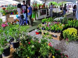 empasa feira de flores foto kleide teixeira 122 270x202 - Feira de Flores com preços populares movimenta Empasa na Capital