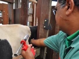 vacinacao contra febre afetosa foto antonio david 17 270x202 - Vacinação contra a febre aftosa segue até o fim deste mês