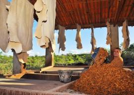10.06.13 arteza cabaceiras fotos roberto guedes 611 270x192 - Investimentos do governo do Estado elevam produção do couro em 25% no Cariri
