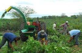SAM 9469Sta Cecilia fenação 270x175 - Agricultores aprendem a preparar fenação para ração do rebanho