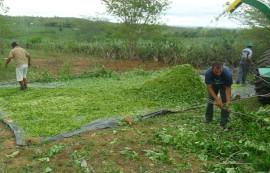 SAM 9519Sta Cecilia Fenação1 270x173 - Agricultores aprendem a preparar fenação para ração do rebanho