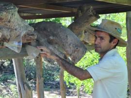 emater agricultor deixa sao paulo para cultimvar no curimatau J.Rento Algodao de Jandaira 270x202 - Dia de Campo discute convivência com a estiagem no Curimataú paraibano