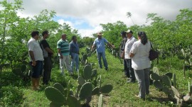 emater agricultores de santa cecilia INSA estiagem semiarido 1 270x151 - Agricultores conhecem ações de convivência com estiagem no semiárido