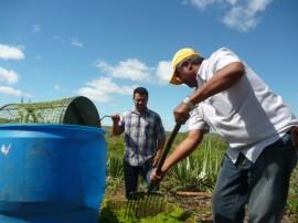 emater orienta criadores de animais a usarem agave na racao Barra Santa Rosa 3 270x202 - Emater orienta criadores para usar agave na ração de animais