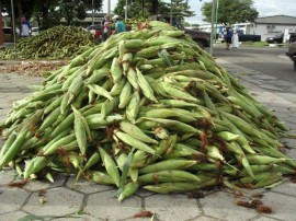 empasa libera comercio do milho verde 11 270x202 - Vendas de milho verde movimentam entrepostos da Empasa