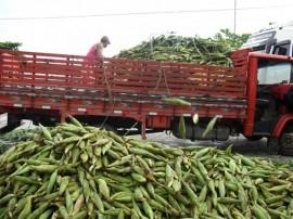 empasa libera comercio do milho verde 21 270x202 - Vendas de milho verde movimentam entrepostos da Empasa