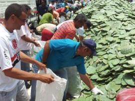 11.03.13 Distribuição de Palma resistente em Patos 270x202 - Semana da Agricultura realiza atividades em Itaporanga