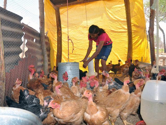 Agricultura Lucia de F+ítima Foto Jos+® Nunes - Governo entrega 196 obras pelo Projeto Cooperar a 12 mil famílias