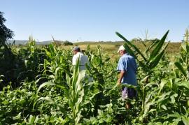 DSC 1079 270x179 - Governo estimula produção de feno para alimentação de rebanhos na estiagem