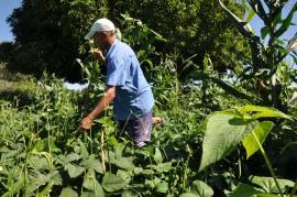 DSC 1084 270x179 - Governo estimula produção de feno para alimentação de rebanhos na estiagem